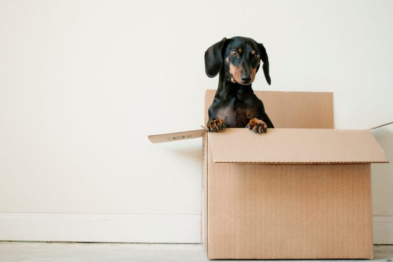 pet in box moving house